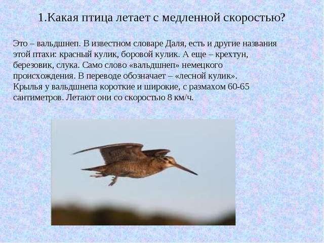 1.Какая птица летает с медленной скоростью? Это – вальдшнеп. В известном слов...