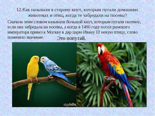 12.Как называли в старину кнут, которым пугали домашних животных и птиц, когд...
