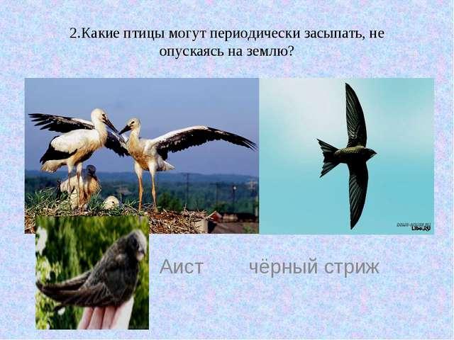 2.Какие птицы могут периодически засыпать, не опускаясь на землю? Аист чёрный...
