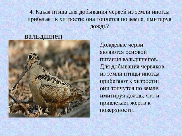 4. Какая птица для добывания червей из земли иногда прибегает к хитрости: он...