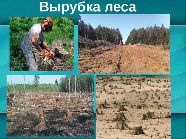 Пути решения проблемы Для того чтобы сократить вырубку леса нужно: как можно...
