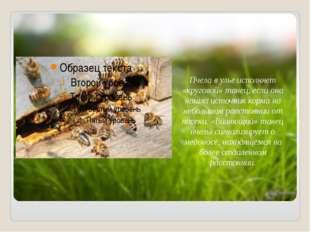Пчела в улье исполняет «круговой» танец, если она нашла источник корма на не