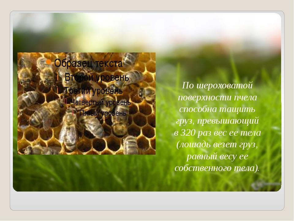 По шероховатой поверхности пчела способна тащить груз, превышающий в 320 раз...