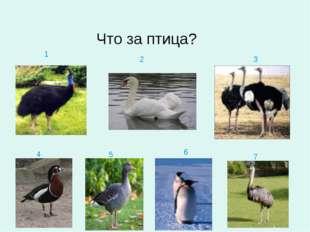 1 2 3 4 5 6 7 Что за птица?