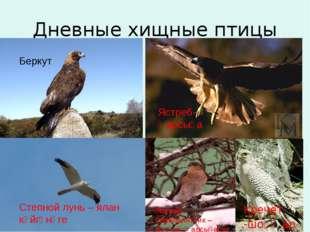 Дневные хищные птицы Ястреб-перепелятник – бүҙәнә ҡарсығаһы Ястреб- ҡарсыға К