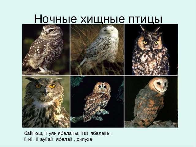 Ночные хищные птицы байғош, ҡуян ябалағы, өкө ябалағы. Өкө, ҡауғаҡ ябалаҡ, си...
