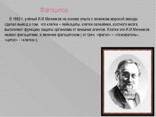 Фагоцитоз В 1882 г. учёный И.И.Мечников на основе опыта с личинкам морской з