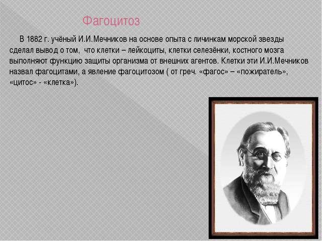 Фагоцитоз В 1882 г. учёный И.И.Мечников на основе опыта с личинкам морской з...