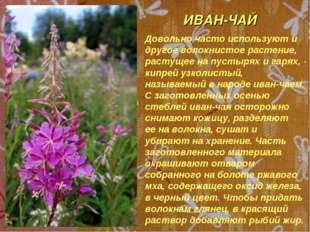 ИВАН-ЧАЙ Довольно часто используют и другое волокнистое растение, растущее на