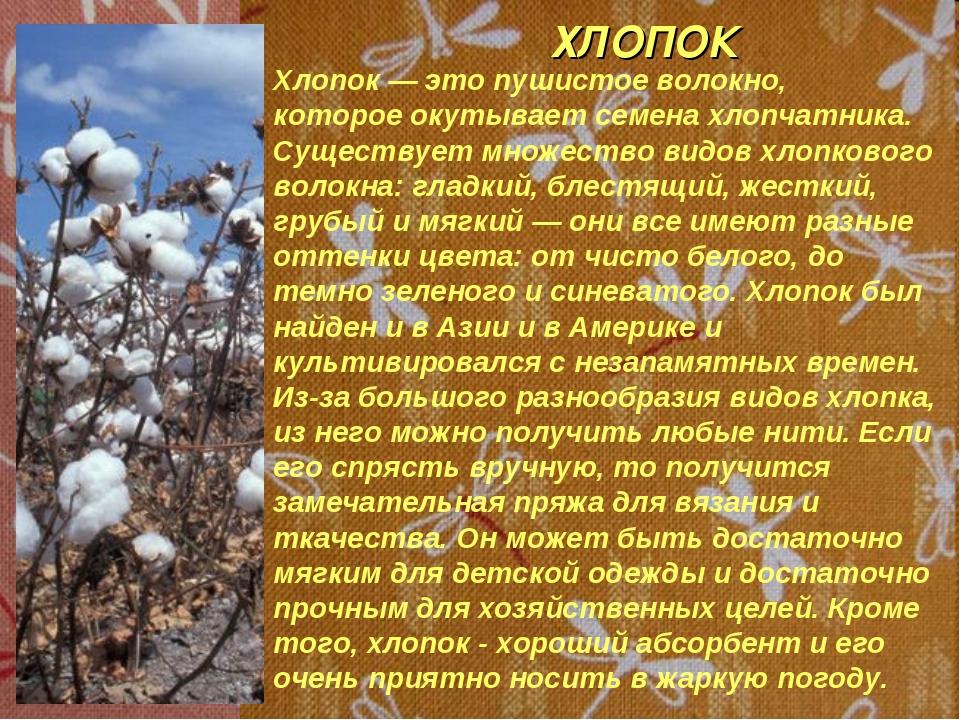 ХЛОПОК Хлопок — это пушистое волокно, которое окутывает семена хлопчатника. С...