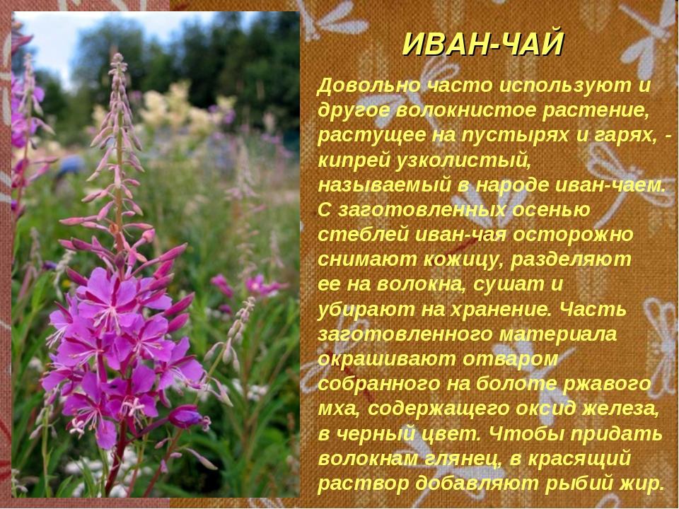 ИВАН-ЧАЙ Довольно часто используют и другое волокнистое растение, растущее на...