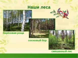 Наши леса берёзовая роща сосновый бор смешанный лес