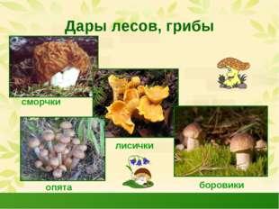 Дары лесов, грибы сморчки лисички боровики опята