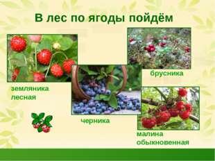 В лес по ягоды пойдём земляника лесная черника малина обыкновенная брусника