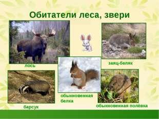 Обитатели леса, звери лось заяц-беляк барсук обыкновенная полёвка обыкновенна