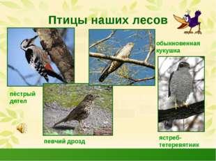 Птицы наших лесов пёстрый дятел певчий дрозд обыкновенная кукушка ястреб- тет