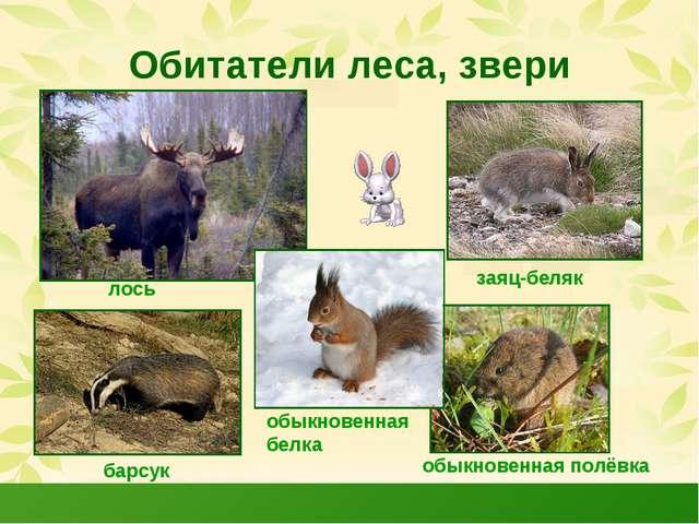 Обитатели леса, звери лось заяц-беляк барсук обыкновенная полёвка обыкновенна...