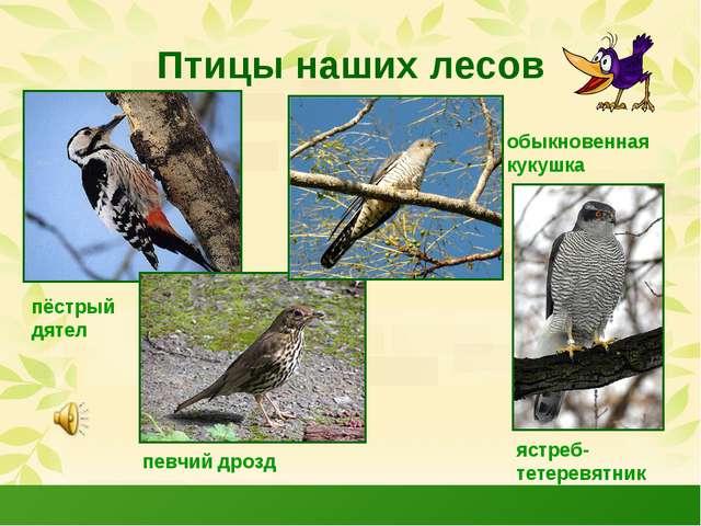 Птицы наших лесов пёстрый дятел певчий дрозд обыкновенная кукушка ястреб- тет...