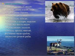 дикие животные, насчитывающие 37 видов: медведи, дикие олени, лоси, волки, го