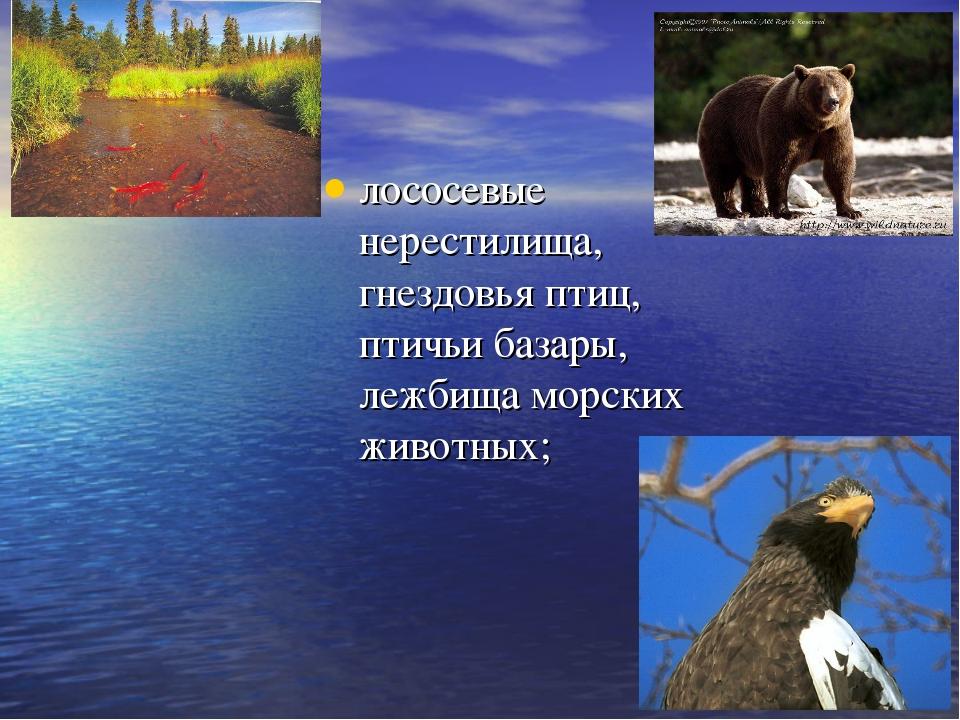 лососевые нерестилища, гнездовья птиц, птичьи базары, лежбища морских животных;