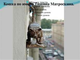Кошка по имени Тишина Матроскина. В доме № 36 на улице Марата появилась новая