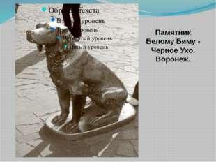 Памятник Белому Биму - Черное Ухо. Воронеж. Знаменитый герой воронежского пи