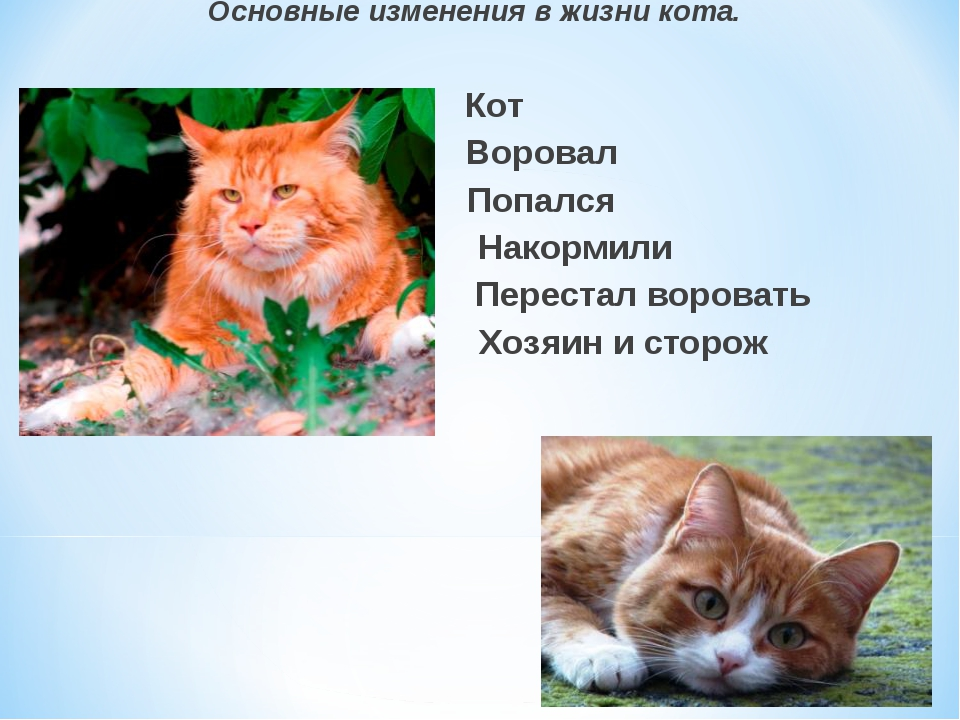 Основные изменения в жизни кота. Кот Воровал Попался Накормили Перестал воров...