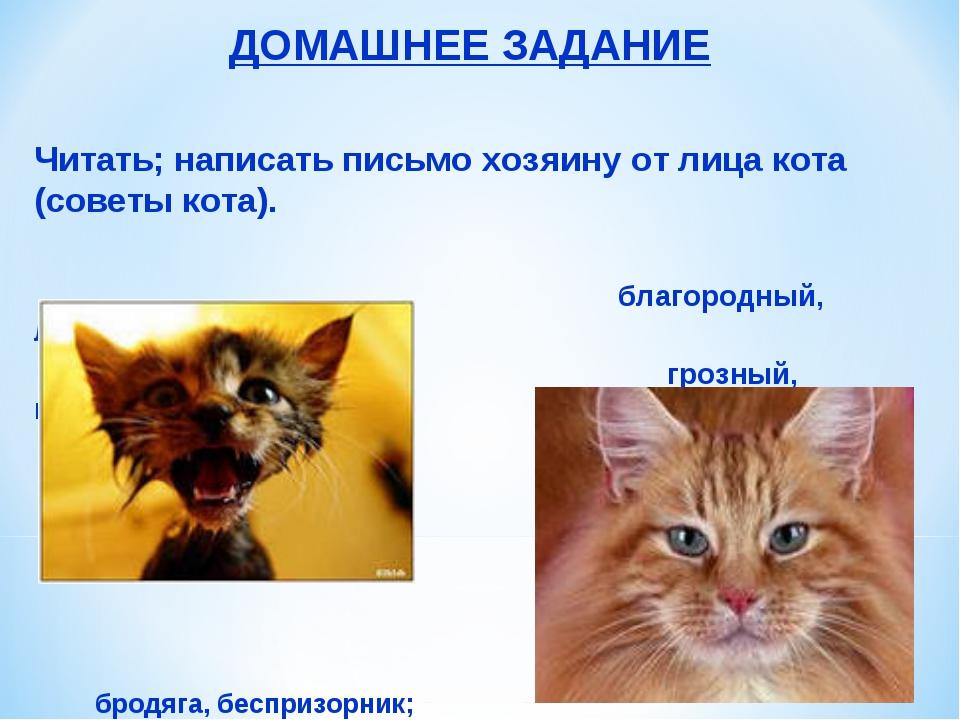 ДОМАШНЕЕ ЗАДАНИЕ Читать; написать письмо хозяину от лица кота (советы кота)....