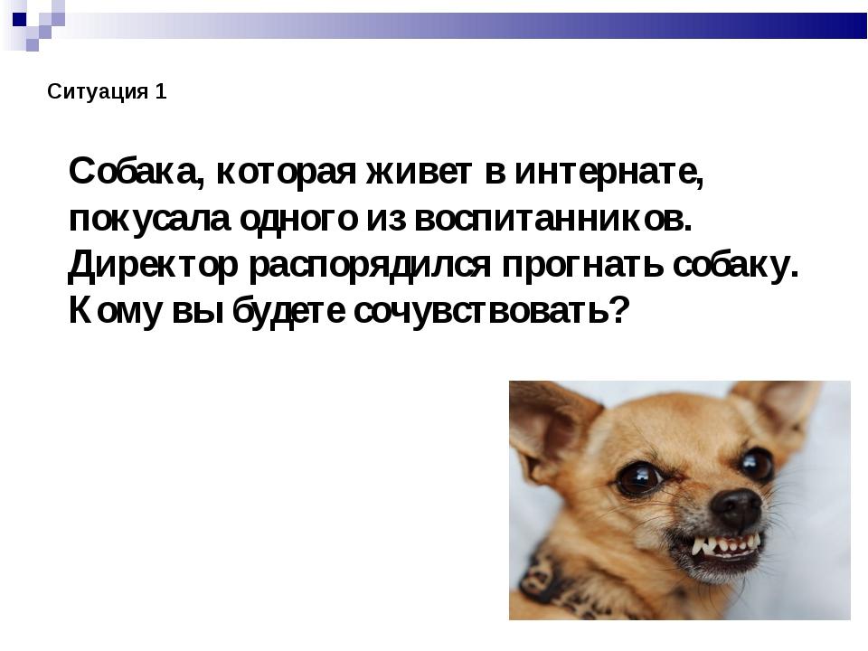 Собака, которая живет в интернате, покусала одного из воспитанников. Директор...