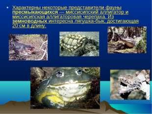 Характерны некоторые представители фауны пресмыкающихся — миссисипский аллига