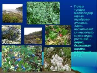 Почвы тундры малоплодородные тундрово-глеевые. Здесь насчитывается несколько