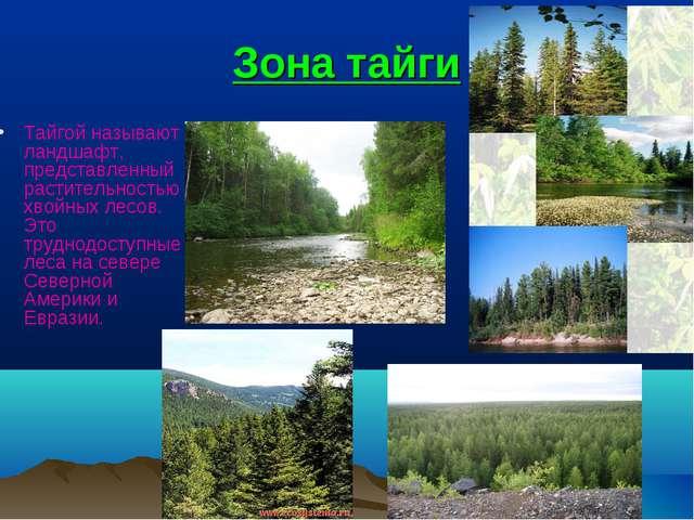 Зона тайги Тайгой называют ландшафт, представленный растительностью хвойных л...
