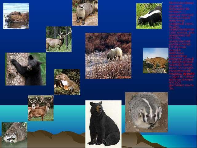 Многочисленны хищники, большинство которых — ценные пушные промысловые животн...