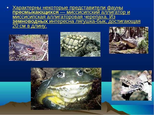 Характерны некоторые представители фауны пресмыкающихся — миссисипский аллига...