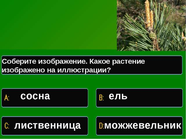 Какое растение изображено на иллюстрации Соберите изображение. Какое растение...