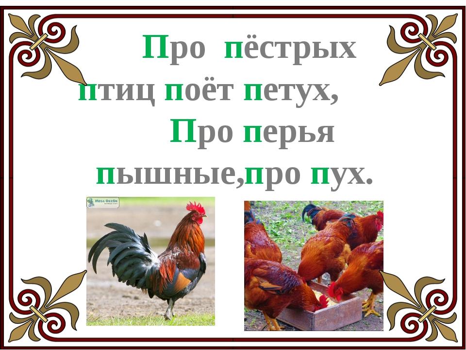 Пели-пели-пеликаны – Это птицы великаны