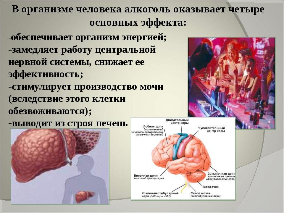 В организме человека алкоголь оказывает четыре основных эффекта: -обеспечивае...
