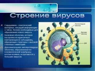 Сердцевина - генетический материал, несущий информацию о типах, белков необхо