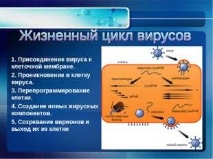 1. Присоединение вируса к клеточной мембране. 2. Проникновение в клетку вирус