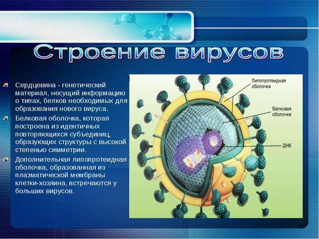 Сердцевина - генетический материал, несущий информацию о типах, белков необхо...