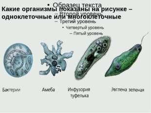 Какие организмы показаны на рисунке – одноклеточные или многоклеточные