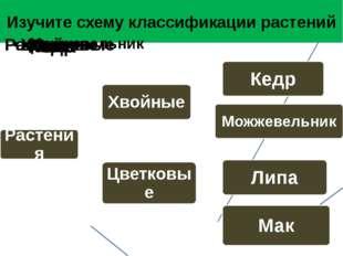 Изучите схему классификации растений