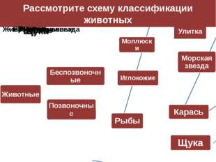 Рассмотрите схему классификации животных