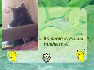 Its name is Pusha. Pusha is 4.