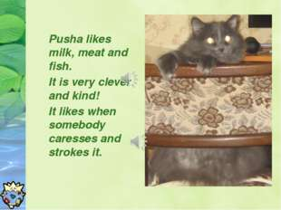 Pusha likes milk, meat and fish. It is very clever and kind! It likes when so