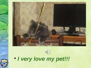 I very love my pet!!!