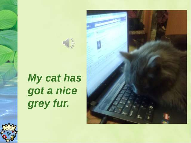 My cat has got a nice grey fur.