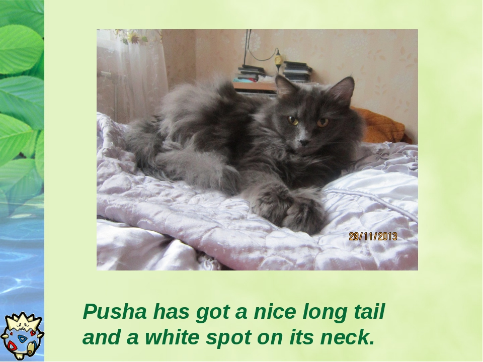 Pusha has got a nice long tail and a white spot on its neck.