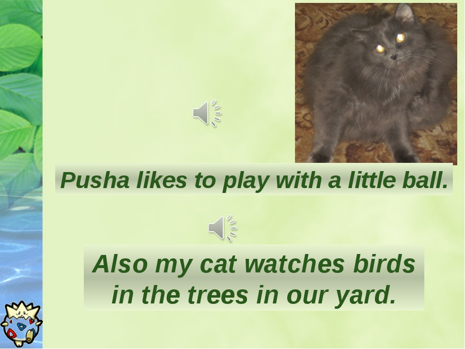 Pusha likes to play with a little ball. Also my cat watches birds in the tree...