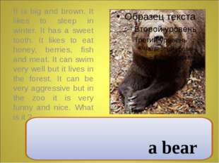 It is big and brown. It likes to sleep in winter. It has a sweet tooth. It l